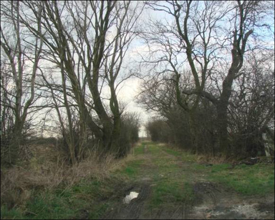 Figure 1: Un-metalled 'green-lanes' are still common in the 'Fosterhouses Strip Enclosure' character area. This example is in an area that was probably enclosed piecemeal from the edge of Fishlake West Field before the 1825 Parliamentary Award.
